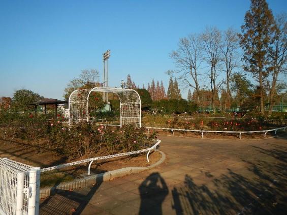 バラ公園 DSCN1922