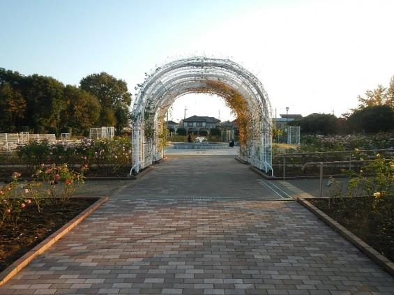 バラ公園 DSCN2022