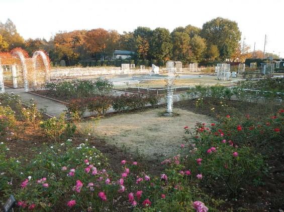 バラ公園 DSCN2025