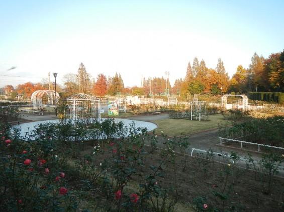 バラ公園 DSCN2026