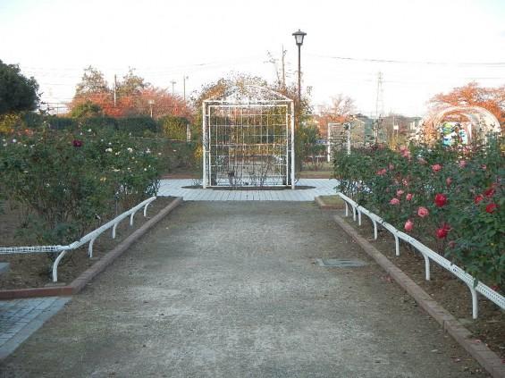 バラ公園 DSCN2027