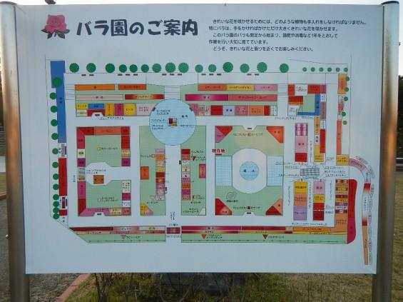 バラ公園 DSCN2033