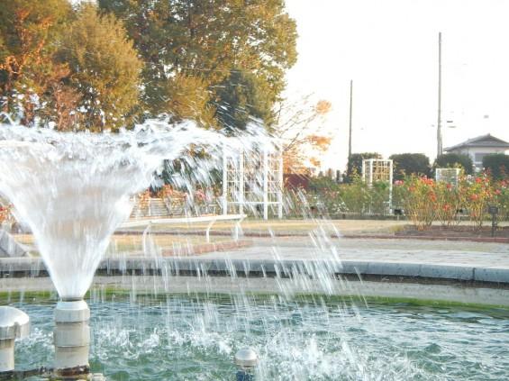 バラ公園 DSCN2045