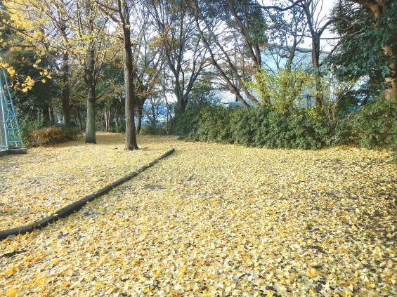 イチョウの落ち葉の綺麗な絨毯 DSCN2469