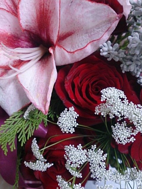 クリスマスの花 DSC_1480