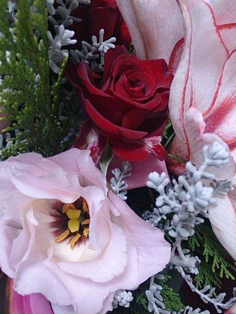 クリスマスの花 DSC_1483