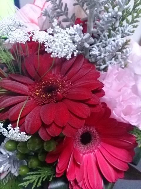クリスマスの花 DSC_1484