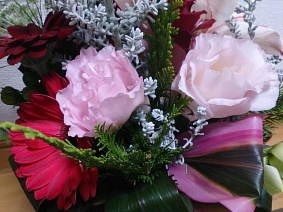 クリスマスの花 DSC_1499