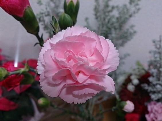 クリスマスの花 カーネーション DSC_1500