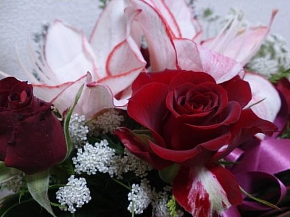 クリスマスの花 DSC_1502