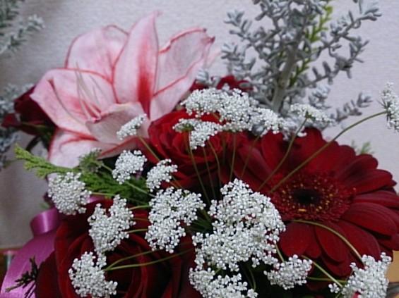 クリスマスの花 DSC_1506