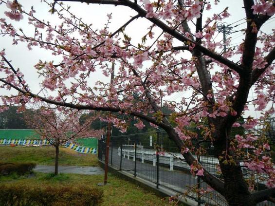 20140320 お彼岸のお墓参りは雨 さいたま市営霊園思い出の里 DSCN3909