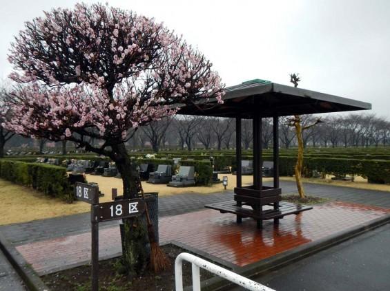 20140320 お彼岸のお墓参りは雨 さいたま市営霊園思い出の里 DSCN3923