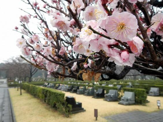 20140320 お彼岸のお墓参りは雨 さいたま市営霊園思い出の里 DSCN3925