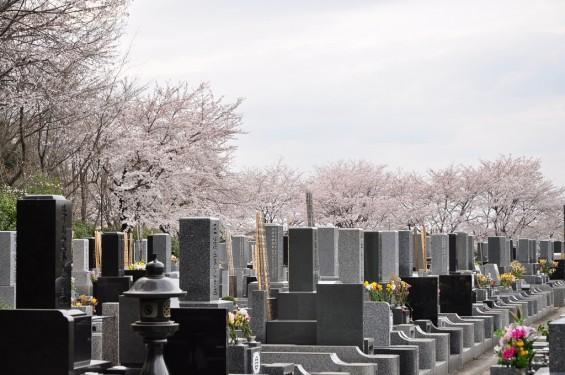 20140402 埼玉県東松山市 森林公園昭和浄苑 桜満開DSC_0620