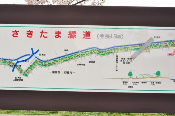 20140404 埼玉県さきたま緑道の桜DSC_0327