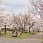 20140404 埼玉県さきたま緑道の桜DSC_0337