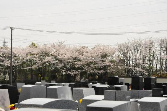 埼玉県桶川市 桶川霊園に行ってきましたDSC_0375