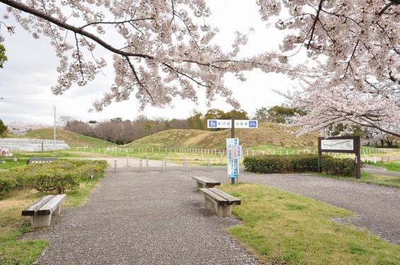 20140404 埼玉県さきたま緑道の桜DSC_0323