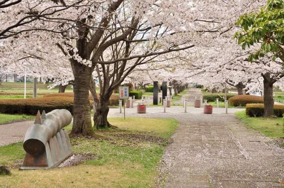 20140404 埼玉県さきたま緑道の桜DSC_0333