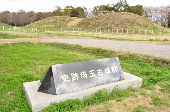 20140404 埼玉県さきたま緑道の桜DSC_0330