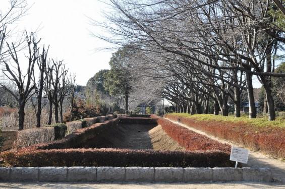 埼玉県川口市 赤山城(赤山陣屋)DSC_0068