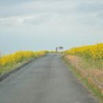一面の黄色いじゅうたん?菜の花でいっぱいの埼玉県吉見町荒川の土手DSC_0659