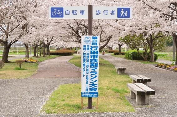 20140404 埼玉県さきたま緑道の桜DSC_0332
