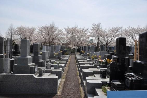 20140401 埼玉県上尾市藤波 上尾靈園の桜が満開DSC_0078