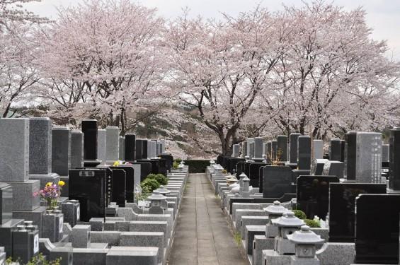 20140402 埼玉県東松山市 森林公園昭和浄苑 桜満開DSC_0618