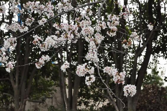埼玉県桶川市 桶川霊園に行ってきましたDSC_0406