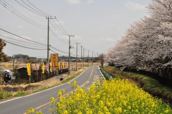 埼玉県桶川市 桶川霊園に行ってきましたDSC_0394