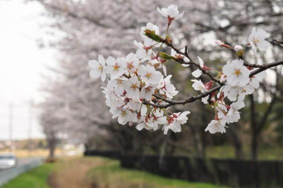 埼玉県桶川市 桶川霊園に行ってきましたDSC_0413