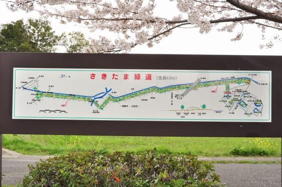 20140404 埼玉県さきたま緑道の桜DSC_0325