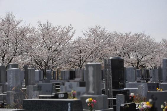 20140401 埼玉県上尾市藤波 上尾靈園の桜が満開DSC_0079