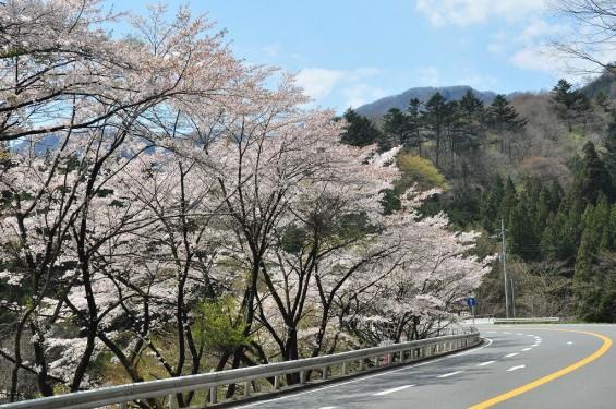 20140424軽井沢DSC_0058碓氷バイパス 桜満開