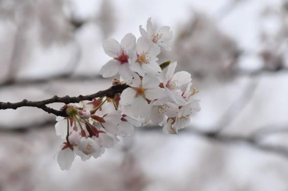 埼玉県桶川市 桶川霊園に行ってきましたDSC_0410