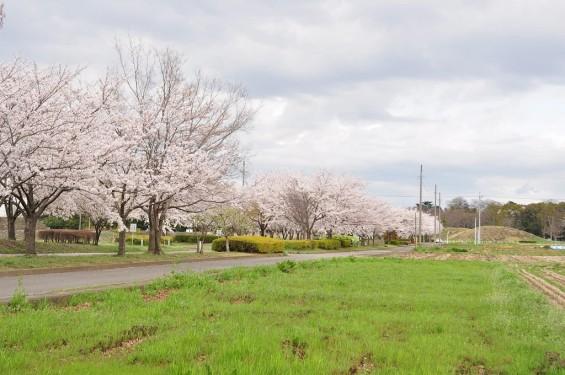 20140404 埼玉県さきたま緑道の桜DSC_0335