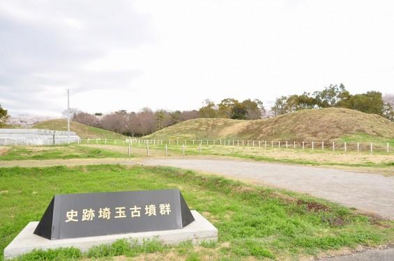 20140404 埼玉県さきたま緑道の桜DSC_0329