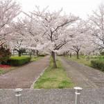 20140404 埼玉県さきたま緑道の桜DSC_0315