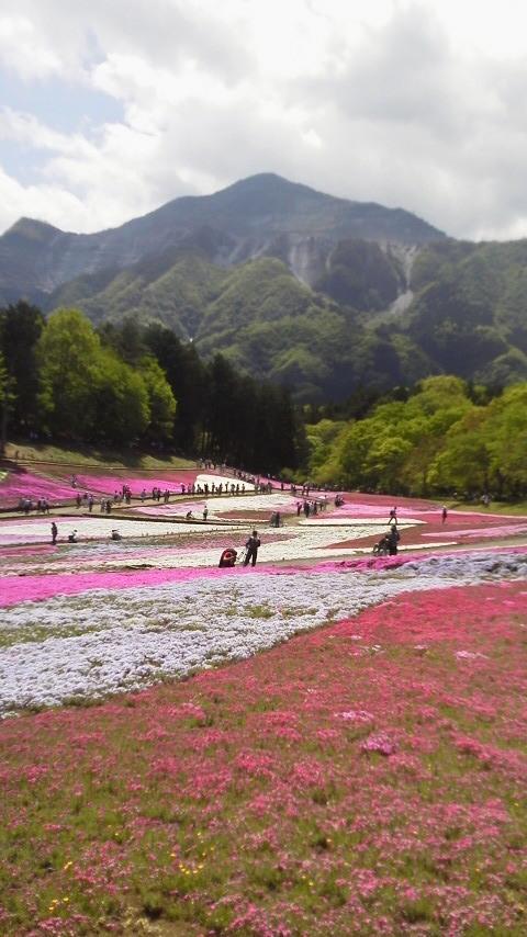 20140502 埼玉県秩父市羊山公園芝桜と武甲山.jpg