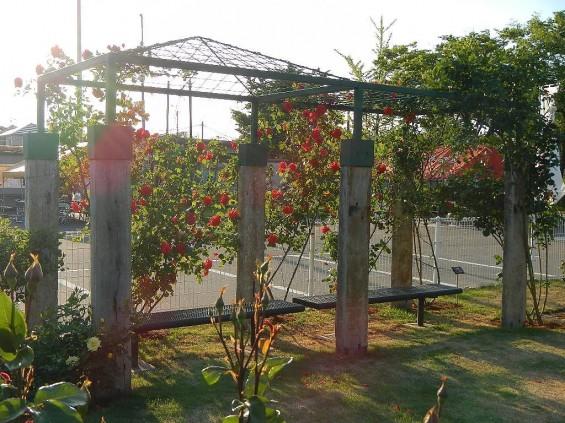 埼玉県のバラ園 バラまつり 伊奈町制施行記念公園 DSCN4401
