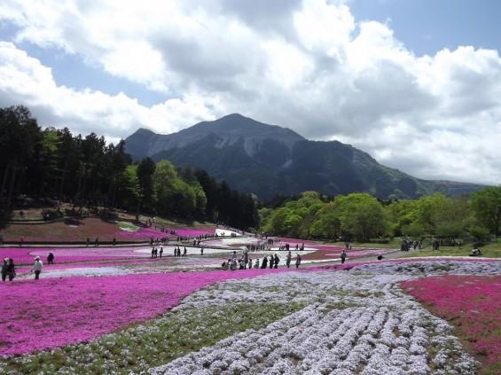 20140502 埼玉県秩父市羊山公園の芝桜DSCF1155
