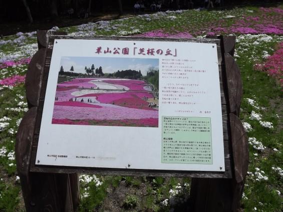 20140502 埼玉県秩父市羊山公園の芝桜DSCF1166