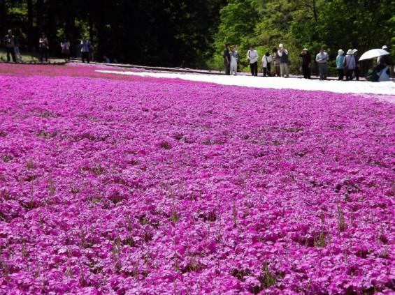 20140502 埼玉県秩父市羊山公園の芝桜DSCF1142