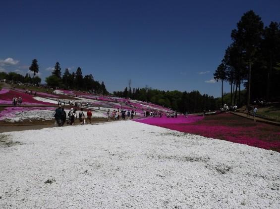 20140502 埼玉県秩父市羊山公園の芝桜DSCF1149