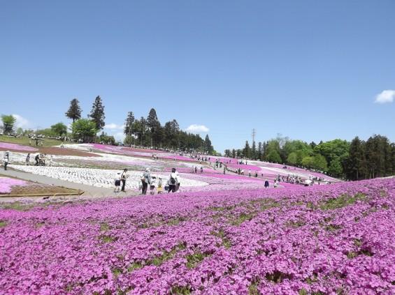 20140502 埼玉県秩父市羊山公園の芝桜DSCF1140