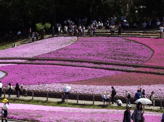 20140502 埼玉県秩父市羊山公園の芝桜DSCF1153