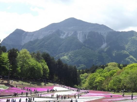 20140502 埼玉県秩父市羊山公園の芝桜DSCF1158