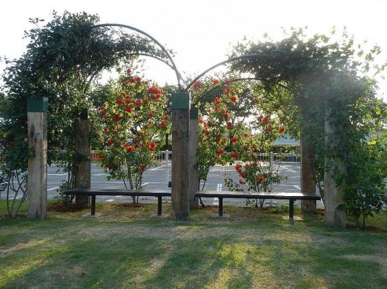 埼玉県のバラ園 バラまつり 伊奈町制施行記念公園 DSCN4395